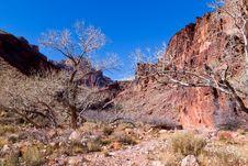 Free Grand Canyon- North Rim, Clear Creek Stock Photo - 20322410