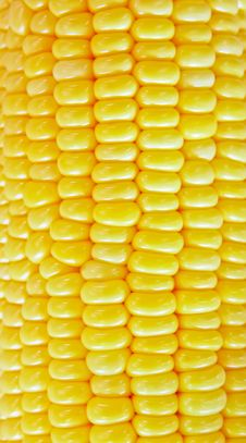 Free Fresh Corn Stock Photo - 20322940