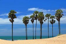 Free Palm Trees Royalty Free Stock Photo - 20322995