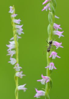 On Floret S Ant Stock Photos