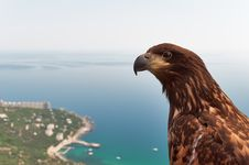 Free Eagle Royalty Free Stock Photo - 20324765