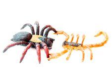 Free Scorpion Fights Spider Stock Photo - 20328030