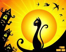 Free Cat Royalty Free Stock Photo - 20328275