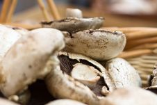 Free Portabello Mushrooms In A Basket Royalty Free Stock Images - 20328359