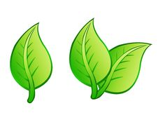 Free Leafs Isolated Stock Photography - 20328482