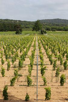 Free Vineyard Stock Images - 20328754