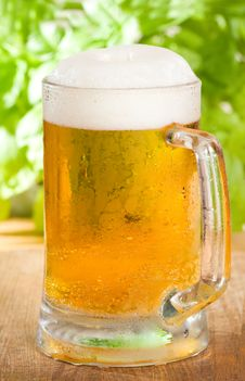 Free Beer Royalty Free Stock Photography - 20329097