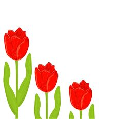 Free Red Tulip Spring Card Royalty Free Stock Photo - 20329125