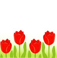 Free Red Tulip Spring Card Royalty Free Stock Photography - 20329127