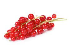 Free Red Currant Royalty Free Stock Images - 20329239