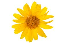 Free Daisy Flower Stock Photography - 20329262