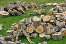 Free Cut Logs Stock Images - 20331044