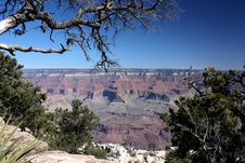 Free Tree Branch Stretching Above The Grand Canyon Stock Photography - 20331562