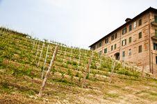 Italian Vineyard - Monferrato Stock Photo
