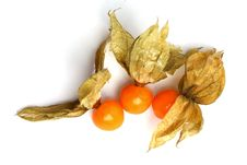 Free Physalis Stock Photos - 20333223
