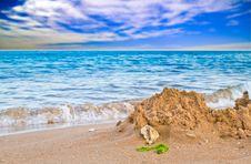 Free Shell On Seashore Stock Photography - 20333402