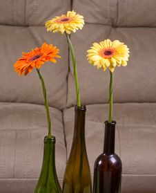 Free Three Gerberas Royalty Free Stock Images - 20334099