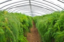 Free Green House Stock Image - 20335121