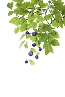 Free Isolated Bilberry 2 Stock Photo - 20335270