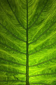 Free Leaf Stock Photo - 20335350