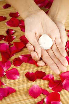 Hands On Rose Petals Royalty Free Stock Image