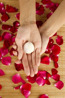 Hands On Rose Petals Stock Image