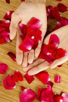 Free Hands On Rose Petals Stock Photo - 20335830