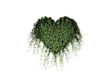 Heart Overgrown With Ivy Royalty Free Stock Photos