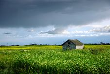 Free Wooden Shed In Canola Field Royalty Free Stock Photos - 20338918