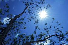 Free Branches Reaching Towards The Sun Stock Images - 20338934