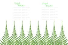 Free Fern Leaves Frame Royalty Free Stock Photography - 20339267
