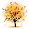 Free Beautiful Autumn Tree. Stock Photos - 20344783