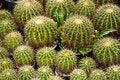 Free Cactus Royalty Free Stock Photos - 20346488