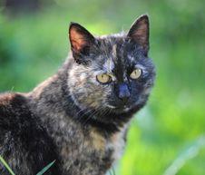 Free Cat Royalty Free Stock Photo - 20340345