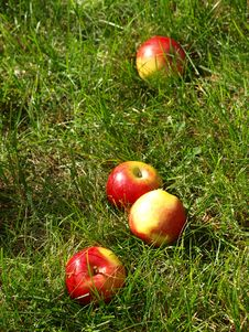 Free Apples In The Grass Royalty Free Stock Images - 20342109