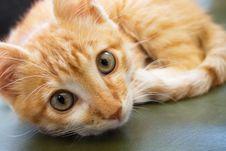Free Cat Stock Photos - 20343153