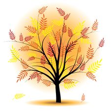 Beautiful Autumn Tree. Stock Photos
