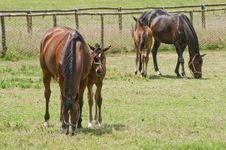 Free Horses Royalty Free Stock Photo - 20345055