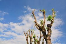 Free Tree Branches Stock Photo - 20345070