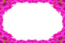 Free Rose Frame Isolated On White Royalty Free Stock Image - 20345456