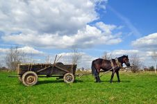 Horse  With A Cart