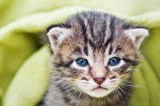 Free Kitten Stock Photography - 20345992