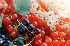Free Currant Royalty Free Stock Photography - 20346127