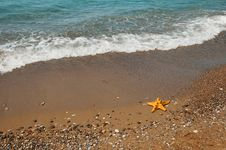 Free Starfish Royalty Free Stock Images - 20346249