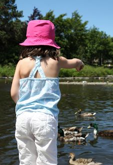 Free Sweet Little Girl Feeding Ducks In A Pond Stock Images - 20347204