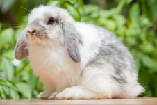 Free Rabbit Stock Photo - 20347450