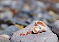 Free The Remains Of Shells Rapana Royalty Free Stock Photography - 20347847