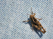 Free Grasshopper Stock Images - 20347864