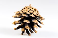 Free Pine Cone Stock Images - 20347924