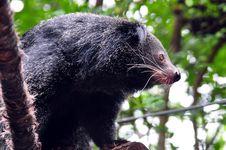 Free Black Bear Royalty Free Stock Image - 20349046